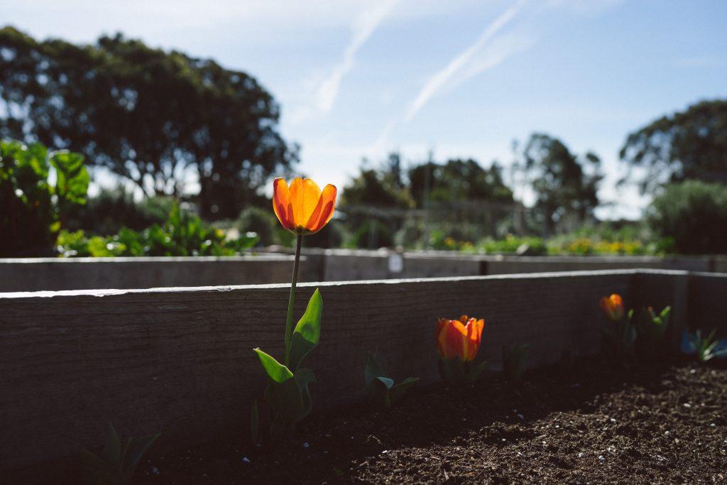 Everyone's Harvest – Volunteer with Us